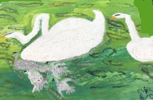 2 trumpeter swans in pond